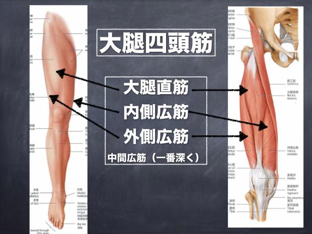 大腿四頭筋.001