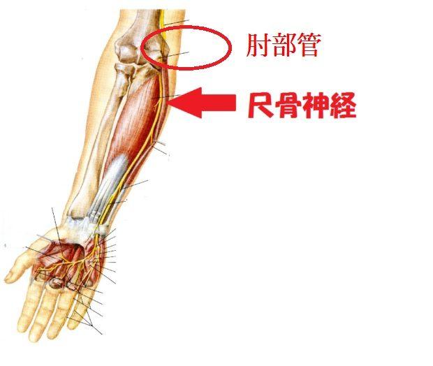 小指がしびれる?!肘部管症候群...